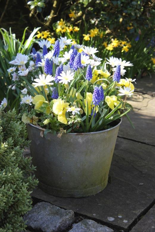 Spring bulbs lift the spirits