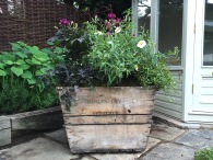 Champagne crate planting for summer celebrations