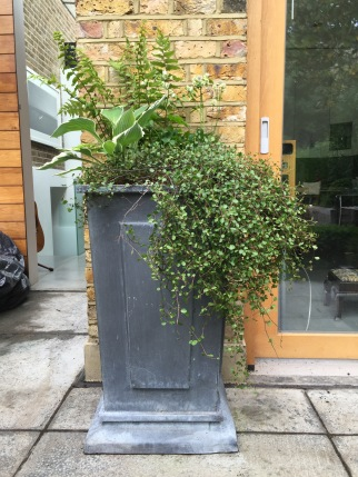 Evergreen foliage delivers year round style and elegance