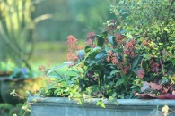 Winter planting adds warmth to cold days