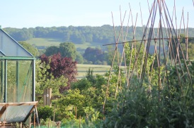 View across the vegetable garden to the far downs