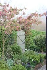 Prunus blossom in springtime