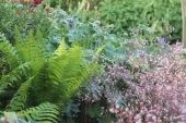 Ferns work well with geraniums and saxifraga urbium