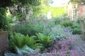 Ferns add texture and grace to mixed planting