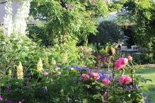 Herbaceous border planting